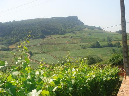 los vinos en francia: